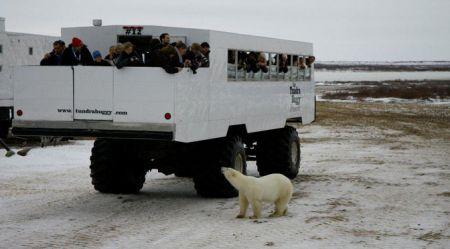 Tundra Buggy: ar ko vadā tūristus pa Kanādas ziemeļiem